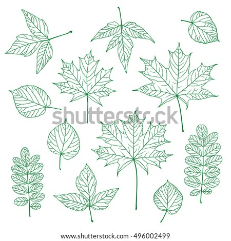 set of outline vector leaves