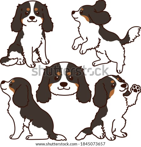Set of outlined tricolor Cavalier King Charles Spaniel illustrations Photo stock ©