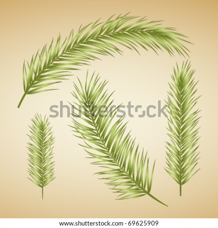 Set of palm leaves. Vector. - stock vector