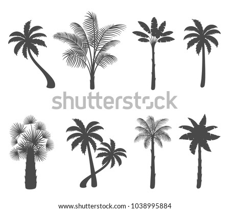 Set of palm tree silhouettes on white background. Vector illustration