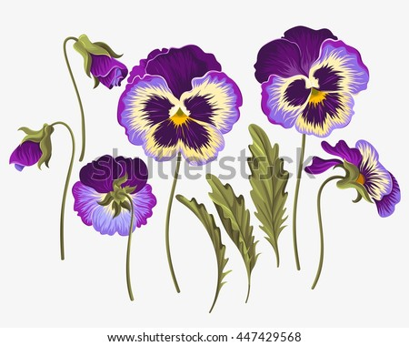 Set of pansy flowers