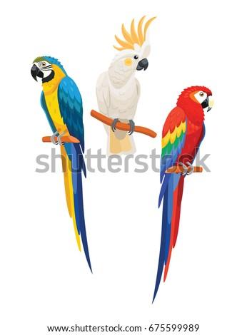 set of parrots vector