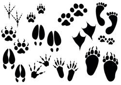 Set of paw print