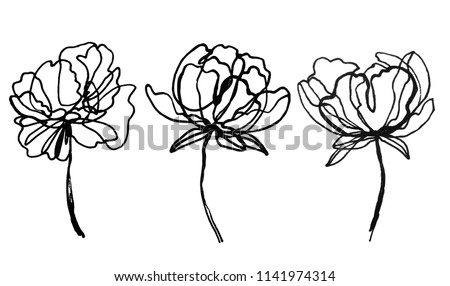 set of peony flowers drawings