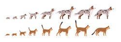Set of pets growth stages vector flat illustration. Domestic animal grow from puppy to dog and kitty to cat isolated on white background. Growing process of pet life cycle