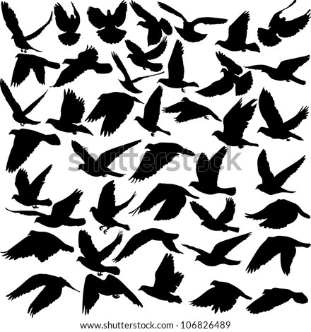 set of pigeon silhouettes - vector illustration