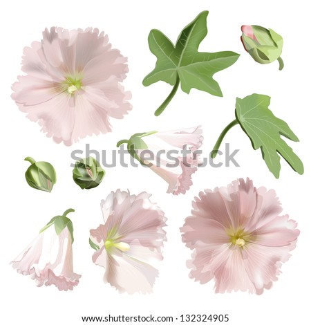 set of pink mallow flowers on