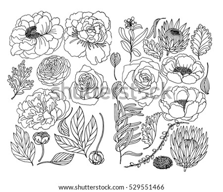 set of plant and floral