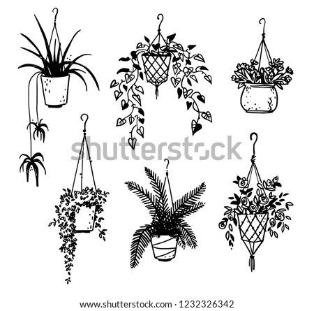 set of potted house plants