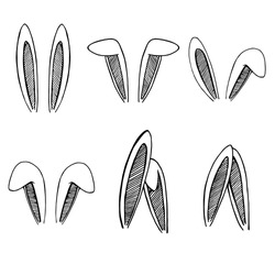 Set of rabbits's ears. Hand drawn isolates elements.