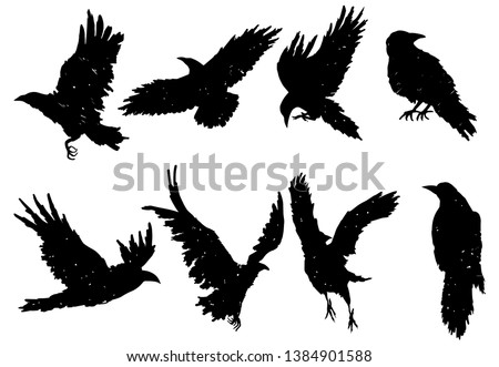 set of ravens a collection of