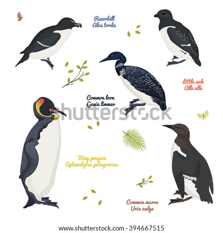 set of realistic birds   birds