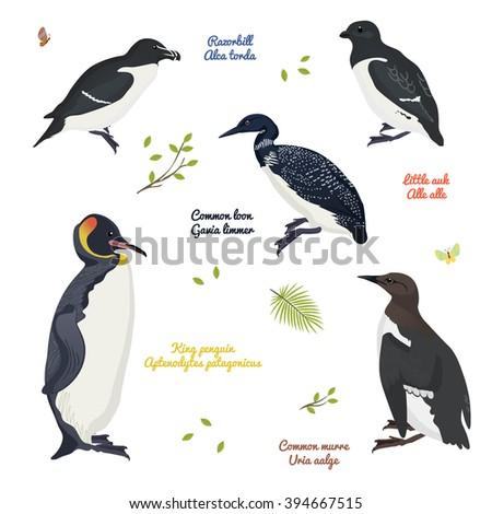 set of realistic birds   birds