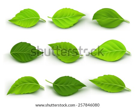 set of realistic green leaves