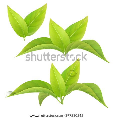 set of realistic green tea