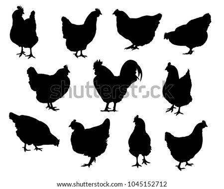 Set of realistic silhouettes hens and chickens - isolated vector on a white background