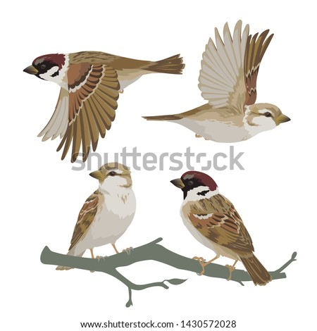 set of realistic sparrows