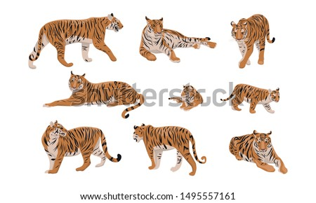 set of realistic tiger and cubs