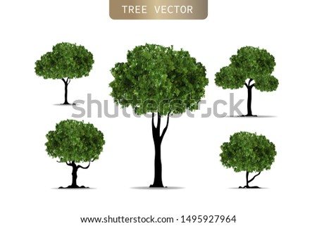 Set of Realistic trees on white background. Nutural design in EPS10 vector illustration.
