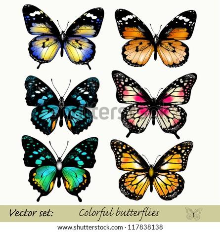 Set of realistic vector butterflies