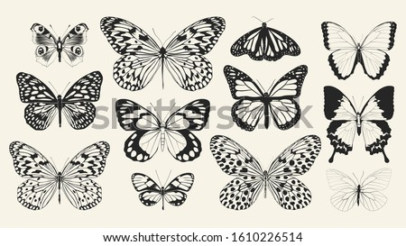 Set of realistic vector butterflies. Collection of vintage elegant illustrations of butterflies. 10 eps. Design element for your project.