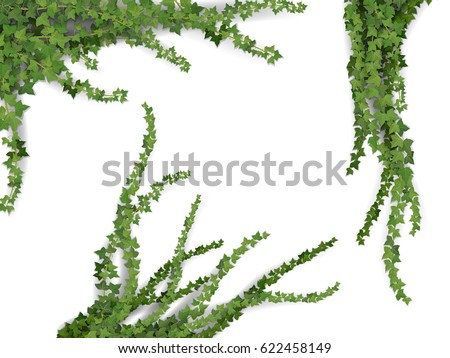 set of realistic vector ivy...