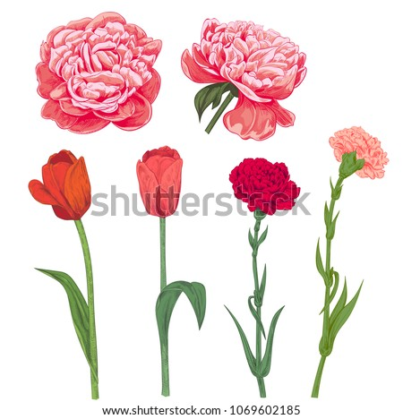 Free tulips vector set of red pink spring garden flowers carnation peony tulip on white mightylinksfo