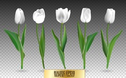 Set of red realistic vector tulip flowers. Elements floral decor for a greeting card women day or mother day. Buds and leaves of different shapes. Isolated on white background. 3d illustration