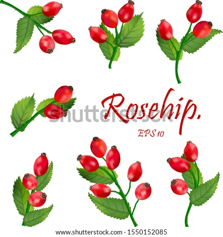 set of red rosehip berries on