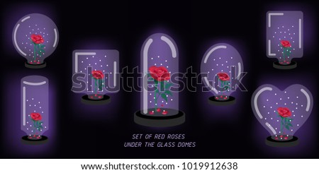 set of red roses under the