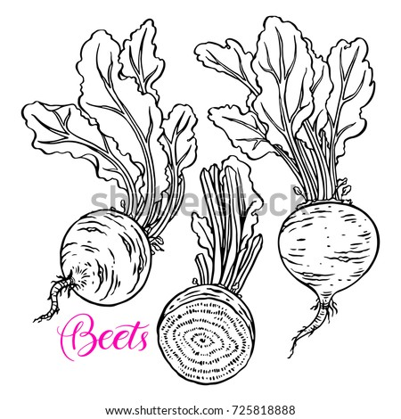 Set of ripe beets. hand drawn vector illustration