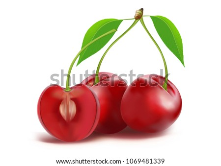 Set of ripe berries isolated on white background, Vector fruit red cherry. 3D illustrate icons set. Realistic illustration.
