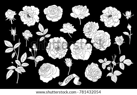 Rose flower vector background black and white download free vector set of roses silhouettes linear vector drawing of flowers of roses buds stems mightylinksfo