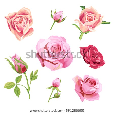 set of roses  pink  red flowers