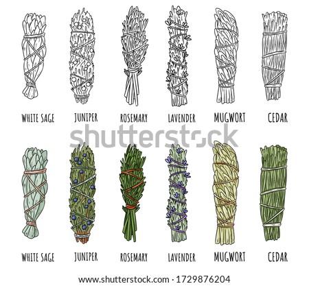 Set of sage and herbs sage smudge sticks bundles. Vector stock hand-drawn set of isolated doodles on white background. Collection of bundles. Sage, rosemary, lavender, cedar, juniper, mugwort Foto stock ©
