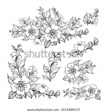 set of sakura flowers elements