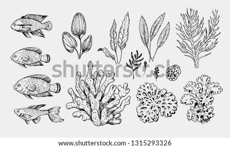 Set of sea fish and plants : corals, algae. Hand drawn sketch converted to vector