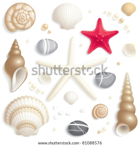 Set of seashells, starfishes and pebbles
