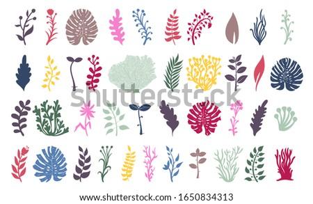 set of seaweeds and coral reef