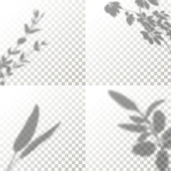Set of Shadow Overlay Plant Vector Mockup. The transparent Shadows overlay effects Of Leaf in a modern minimalist style. For presentation Flyer, Poster, blank, logo, invitation