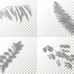 Set of Shadow Overlay Plant Vector Mockup. The transparent Shadows overlay effects Of Tropical Leaf in a modern minimalist style. For presentation Flyer, Poster, blank, logo, invitation