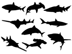 Set of Shark Silhouettes. Vector Images