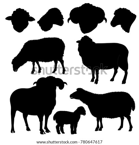 Set of sheep silhouettes on white background. Vector illustration