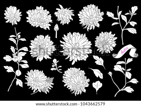 set of silhouettes of asters