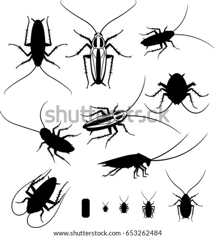 Shutterstock Set of silhouettes of cockroaches, vector EPS 10