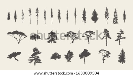 Set of silhouettes of coniferous trees. Pine, fir, spruce, cedar, larch. Hand drawn vector illustration, sketch