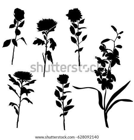 Set of silhouettes of flowers, roses, chrysanthemums, orchids, vector, black color, isolated on white background, hand drawing