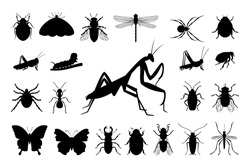 Set of silhouettes of insects: butterfly, mantis, grasshopper, dragonfly, mol, flea, fly, caterpillar, spider, mosquito