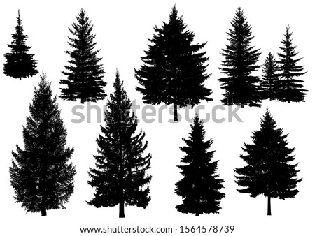 Set of silhouettes of pine trees or fir trees