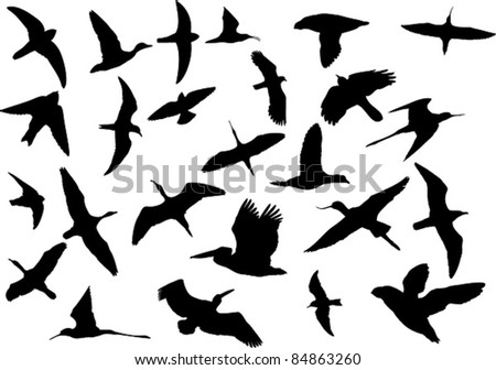 Set of silhouettes of various wild birds including pelican, stilt, avocet, puffin, duck, goose, ibis, swallow, tern, gull and others